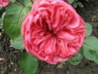 Rose Graf Lennart Foto Mail-Brandt
