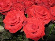 Rose Grande Amore Foto Brandt