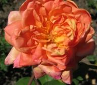 Rose Anne Marie Trechslin Foto Mail-Brandt