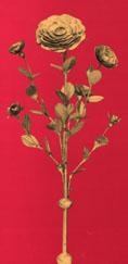 Die Goldene Rose Foto Gesellschaft Schweizer Rosenfreunde
