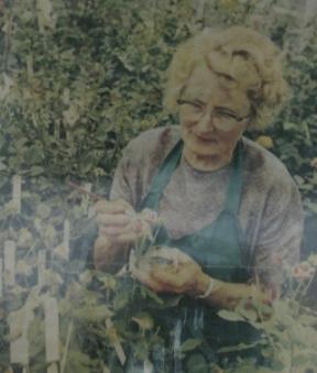 Züchterin Anni Berger Foto Brandt - fotografiert im Rosenmuseum Bad Langensalza